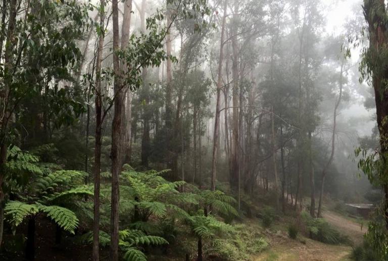Myers Creek Cascades, Healesville, Yarra Valley, Victoria