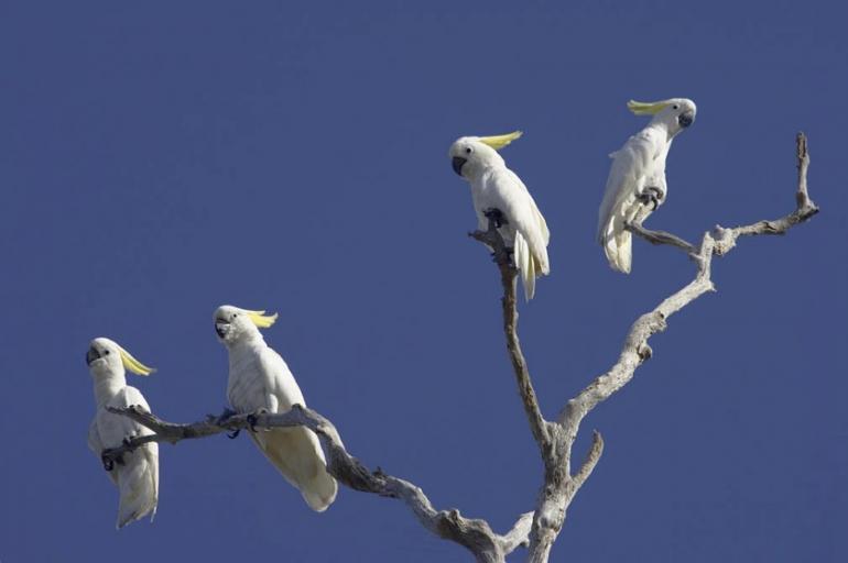 Bamurru Plains, Northern Territory