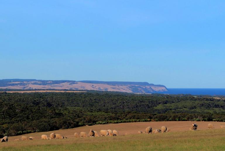 Stowaway Kangaroo Island, South Australia