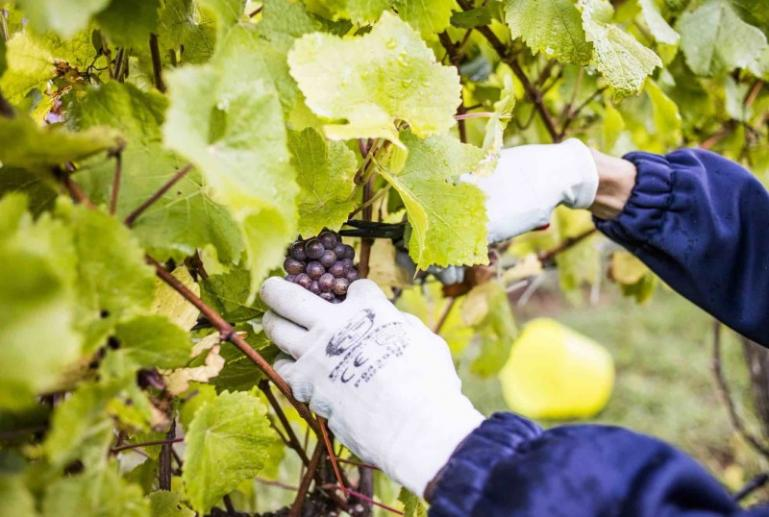Polperro Winery Villas, Mornington Peninsula, Victoria