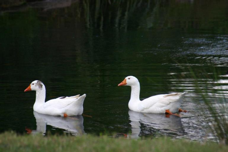 Ripples on the Creek, Grady's Creek, NSW